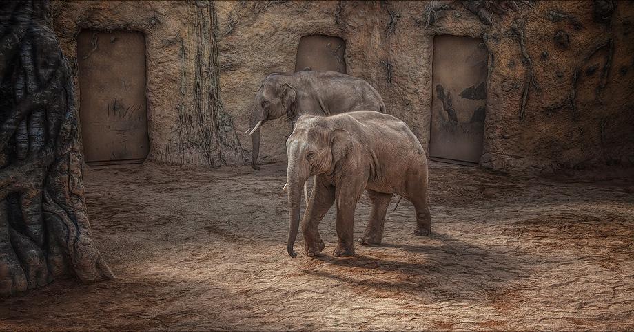 Elefanten Kopie