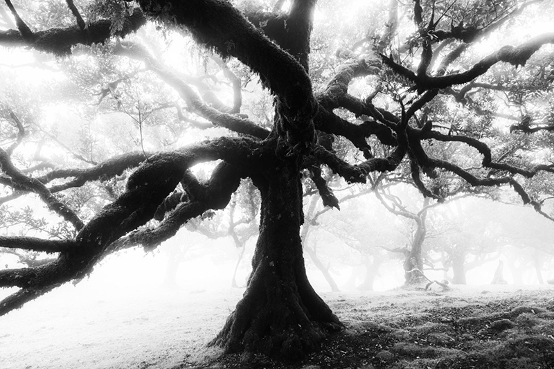 1_500px___Magic_Forest_I_by_Sven_Kluegl