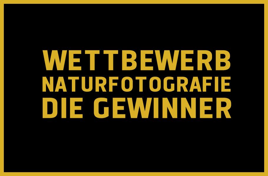naturfotografie_gewinner