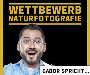 Gabor spricht… // Wettbewerb Naturfotografie